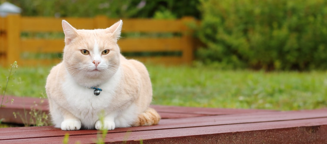 Orange and white cat sitting on a wooden porch in the yard.