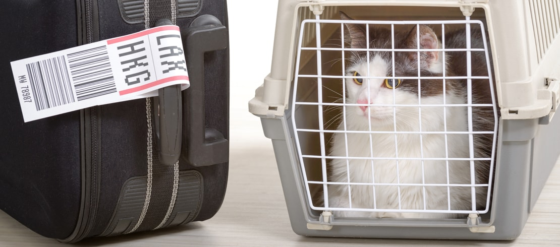 A Cyprus cat sitting in a travel carrier next to a suitcase.