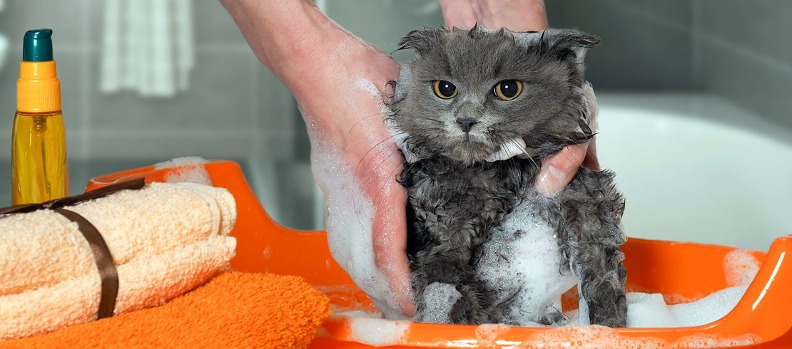 An unhappy cat being scrubbed with soap in an orange baby bathtub.