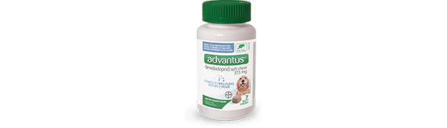 advantus® (imidacloprid) Soft Chew for Dogs