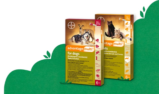 Two packages of Advantage Multi® for dogs and cats.