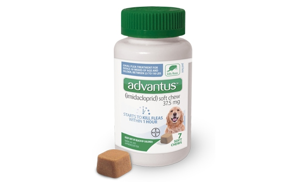 advantus for Dogs bottle with soft chew