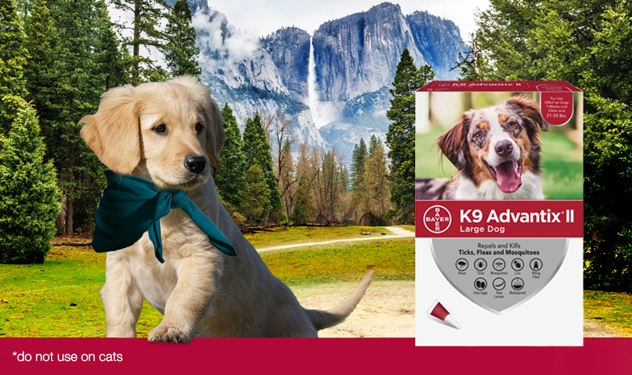 A Golden Retriever puppy on a trail in front of a mountain, exploring the great outdoors, with a K9 Advantix® II for Large Dogs product package overlay.