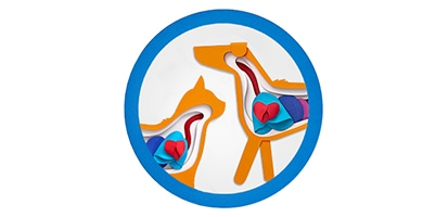 Icon that shows the internal organs of a dog and cat.