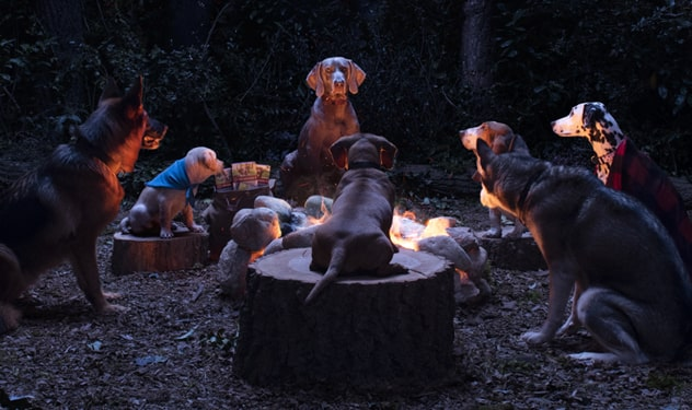 Dogs sitting around a campfire.