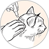 How to apply Advantage II for cats: Step 4 apply flea treatment on the area