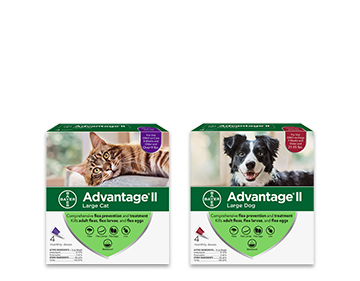 Coupon for $4 off the purchase of a 4 pack of Advantage II for cats or dogs