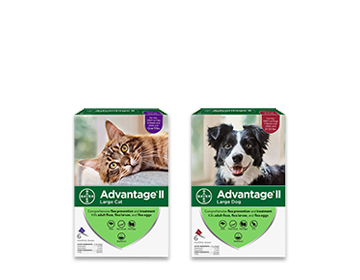 Coupon for $6 off the purchase of a 6 pack of Advantage II for cats or dogs.