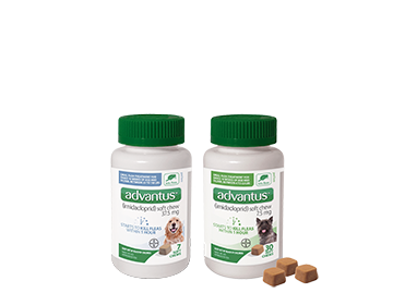 Coupon for $5 off the purchase of advantus® for dogs 7 count or 30 count bottles.