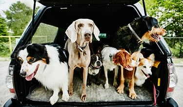 "Six dogs sitting in the back of an SUV with text overlay saying: ""What we stand for""."