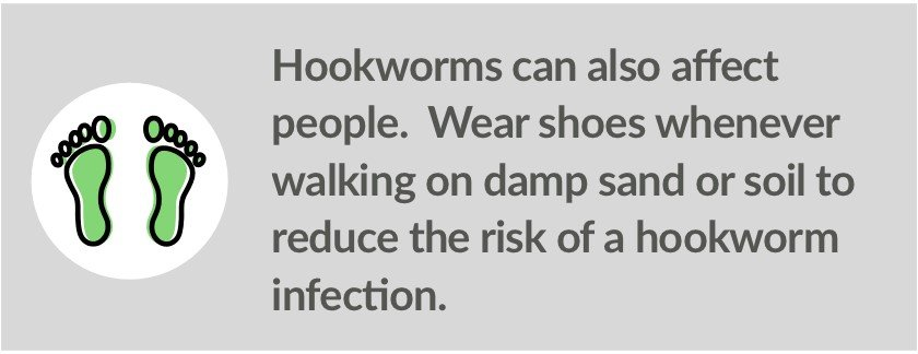 Walking barefoot in contaminated sand or soil is a risk factor for hookworms.