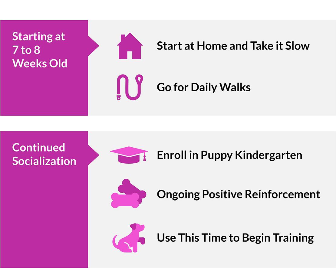 A 7-8-week-old puppy can go for daily walks, enroll in puppy kindergarten, begin training with positive reinforcement.