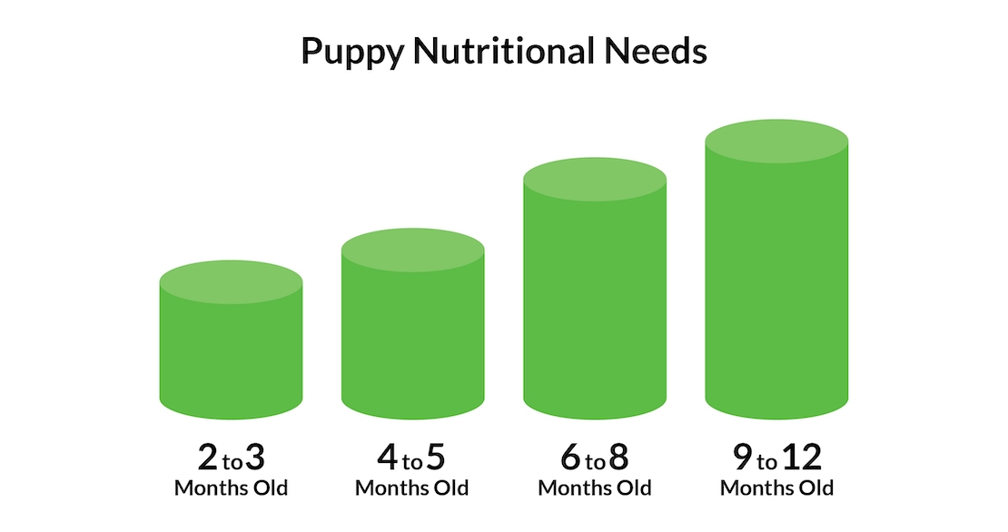 A chart of puppy feeding recommendations based on age.