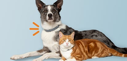 A dog and a cat both wearing Seresto flea and tick collars.