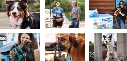 A collage of pictures of dog owners and their pets.