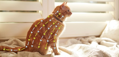 Diagram showing how Seresto® for cats works through its release technology on an Orange Tabby.