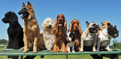 A group of large and small dogs all sitting together on a park bench.