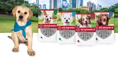 Golden retriever puppy next to 4 K9 Advantix® II packaging boxes