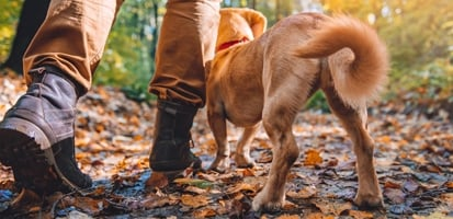 A man hiking with his Shiba Inu on a trail in the woods.