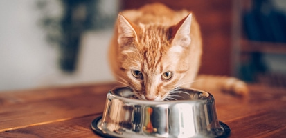 An orange tabby cat eating out of a silver bowl on a wooden table.