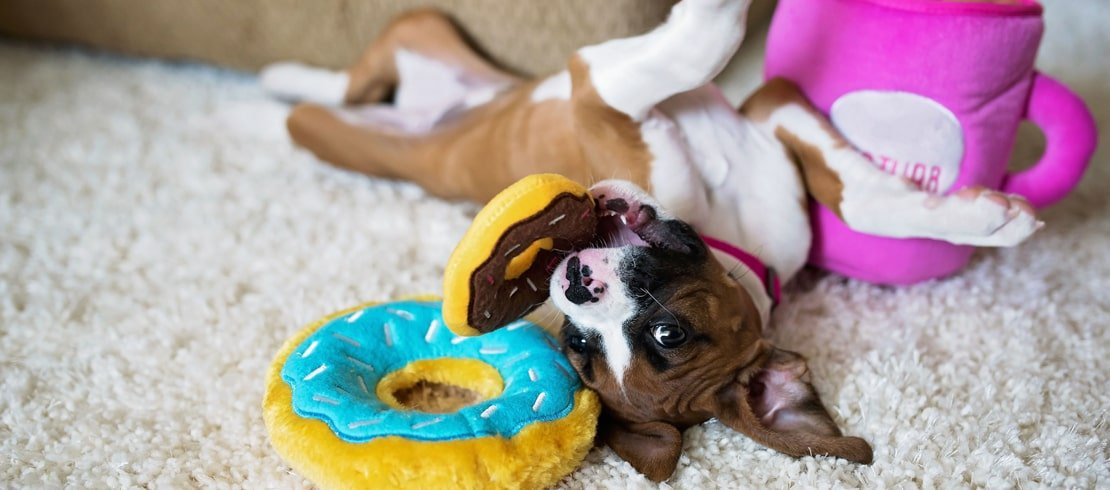 Puppy playing with donut plush toys
