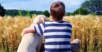 A boy holding a Labrador sitting in front of grain field.