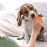 An owner giving her dog an orange treat toy for mental exercise.