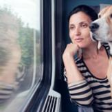 A beagle looking out of a train window with owner.