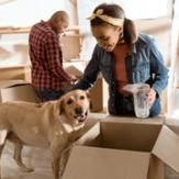 A woman petting a happy Labrador retriever in front of a man who is packing up a room with cardboard boxes to move.