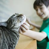 A tabby cat purring while enjoying scratches.