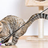 Owner using a feather wand to exercise her two cats.