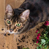 A tabby cat standing next to a broken flowerpot.