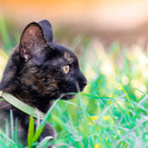 A calico cat standing on grass field.