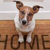 Terrier mix rescue dog sitting on a welcome mat.